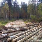 В лесу. 30 сентября 2017 г. (Фото Елены Васильевой)
