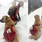 11-летняя девочка с собакой спасла козу и ее детеныша в горах