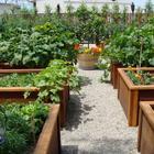 Высокие отношения на вашем огороде