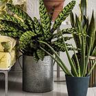 9 лечебных комнатных растений на подоконнике — выбирайте