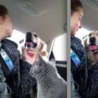 Уморительные фото о том, как уживаются коты и собаки в одной семье