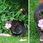17 представителей семейства кошачьих, которые растопят сердце даже заядлого собачника
