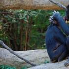 Животные, выражающие чувства гораздо романтичней людей