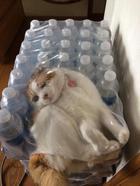 Кошки, попавшие в смешные и нелепые ситуации
