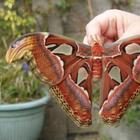 19 гусениц до и после превращения в бабочек