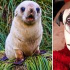20 доказательств того, что тюлени это собаки подводного мира