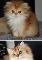 25 фотографий очаровательных котят, которые превратились в роскошных котов