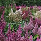 9 неприхотливых травянистых многолетников для влажных почв