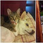 Как коты и собаки уживаются вместе: 30 умилительных примеров