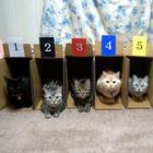 Хранение  и упорядочивание  котов