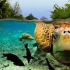 Красота под водой