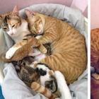 Кот, который поддержал свою кошку во время родов