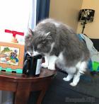 20 раз, когда кошки вели себя как полные дурики, но им ни капельки не было стыдно