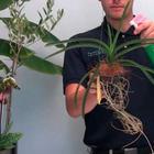 Как и когда удобрять орхидеи