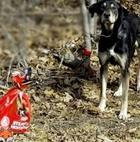 Пса привязали к дереву с пакетом корма и запиской
