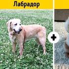 Породы собак, о которых никто не знает