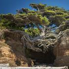 Жажда жизни: деревья, растущие не благодаря, а вопреки