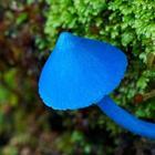 Удивительные грибы нашей планеты, которые больше напоминают флору из других миров