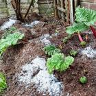 Зола как удобрение для огорода — основные свойства и преимущества вещества