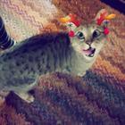 15 котов-приколистов