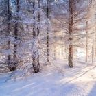 Зимняя Русь.Великолепные фото!