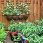 Красивые грядки своими руками: 50 идей, как украсить огород и вырастить хороший урожай
