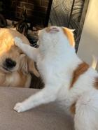 Нет для собаки страшнее зверя, чем наглая домашняя кошка