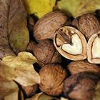 Какой орех можно вырастить на участке и стоит ли заморачиваться с экзотами