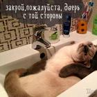 Картинки этих смешных котов развеселят вас за 1 минуту