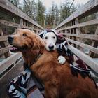 Фотографии двух милейших псов и великолепного кота, у которых полмиллиона подписчиков в Инстаграме