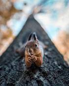 Фотограф превращает лесных обитателей в профессиональных моделей, от которых глаз не оторвать