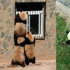 17 животных, которые обожают подсматривать