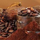 Чем полезна для мозга «пища богов»