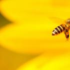 Куда деваются пчёлы зимой?