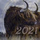 Характеристика 2021 года по восточному календарю