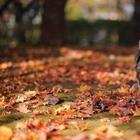 10 идей, что делать с опавшими осенью листьями