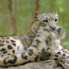 10 малоизвестных фактов о жизни животных