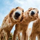 Лучший собачий фотограф 2019