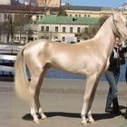 Ахалтекинская лошадь: невероятно редкая порода самых красивых лошадей в мире