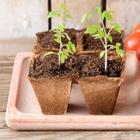 Выращивание томатов по Лунному календарю в 2019 году