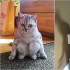 Коты, которые ставят в тупик своим поведением