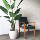 Комнатный цветок с большими листьями: описание с фото, названия цветов и рекомендации по уходу