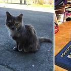 19 раз, когда у людей в доме оказался кот. Но это был даже не их кот