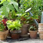 Какие овощи можно пересадить в горшок на зиму, чтобы продолжить сбор урожая