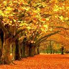 Навеянное листопадом (Стих)