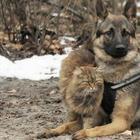 Кот, которые вырос среди собак