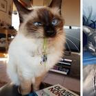 Фото, просмотрев которые, вы обязательно захотите завести кота