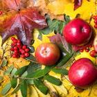 Закрываем сезон – 7 дел, которые нужно сделать в саду в октябре