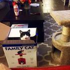 Коты, которые не знают что делать со своими подарками