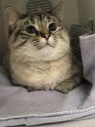 19 трудолюбивых котиков, у которых есть работа, и им больше не нужен человек, чтобы заплатить за корм